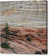 Checkerboard Mesa In Zion National Park Canvas Print