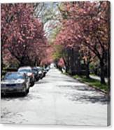 Cherry Blossom In Vancouver City Canvas Print