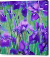 Close-up Of Purple Flowers Canvas Print