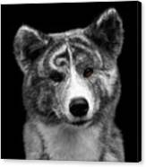 Closeup Portrait Of Akita Inu Dog On Isolated Black Background Canvas Print