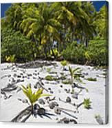 Coconut Palms On A Polynesian Beach Canvas Print