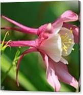 Columbine From The Songbird Series Named Robin Canvas Print