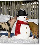 Curious Piglets And Snowman Canvas Print