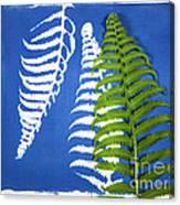 Cyanotype Print, Fern Canvas Print