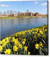 Daffodils Beside The Thames At Hampton Court London Uk Canvas Print