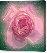 Digitally Manipulated Pink English Rose  Canvas Print