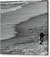2 Dogs 2 Men Beach  Canvas Print