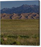 Eight Point Buck In The Grass Lands Of The Great Sand Dunes Canvas Print