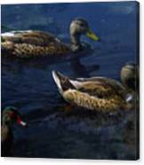 Exotic Birds Of America Ducks In A Pond Canvas Print