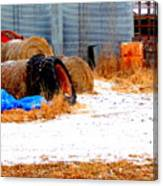 Farmyard Canvas Print