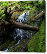 Fern Falls At Jedediah Redwoods State Park Canvas Print