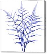 Fern, X-ray Canvas Print