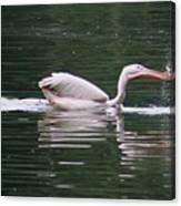 Fishing Pelican Canvas Print