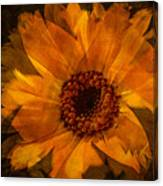 10449 Flower Canvas Print