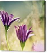 Flower On Summer Meadow Canvas Print