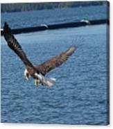 Flying Eagle. Canvas Print