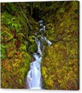 Streaming In The Olympic Rainforest Canvas Print