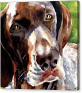 German Short Haired Pointer Canvas Print