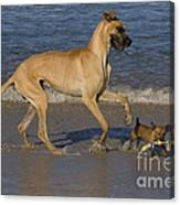 Giant And Tiny Dogs Canvas Print