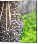 Gila Woodpecker Canvas Print