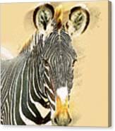 Grevys Zebra, Samburu, Kenya Canvas Print