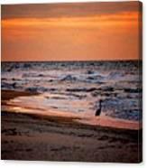 2 Herons On The Beach Canvas Print