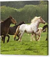 Horses On The Meadow Canvas Print