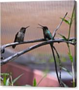 2 Hummingbirds Canvas Print