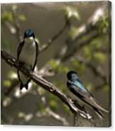 2 In A Tree Canvas Print