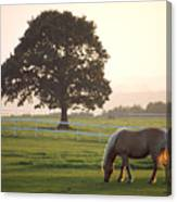 Irish Horse In The Gloaming Canvas Print