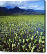 Kauai, Wet Taro Farm Canvas Print