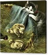 Kitten Peeking In On Chicks Canvas Print