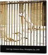 Lion Cage, Carnivore House, Philadelphia Zoo, C. 1900 Canvas Print