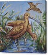 Longbilled Curlews Canvas Print