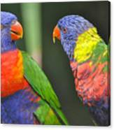 2 Lories In Discussion Canvas Print