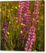 Lupins And Buttercups Canvas Print