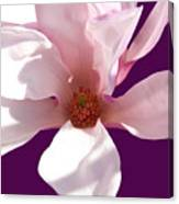 Magnolia Art Canvas Print