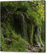 Malanaphy Springs Canvas Print