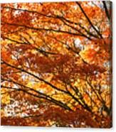 Maple Tree Foliage Canvas Print