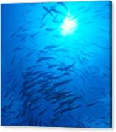 Micronesia Marine Life Canvas Print