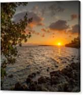 Morning At The Mangroves Canvas Print
