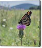 Mountain Meadow Monarch Canvas Print