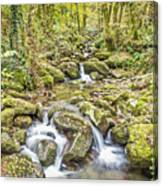Mountain Stream In Autumn Canvas Print