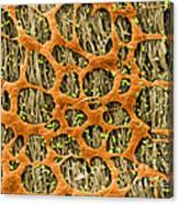 Myenteric Plexus, Sem Canvas Print