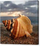North Shore Seashell Canvas Print