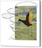 Northern Jacana Canvas Print