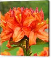 Office Art Prints Azaleas Botanical Landscape 11 Giclee Prints Baslee Troutman Canvas Print