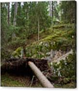 Old Forest In Kauppi Tampere Canvas Print