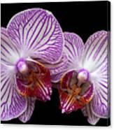 2 Orchids Canvas Print