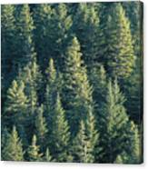 Oregon, Cascade Mountain Canvas Print